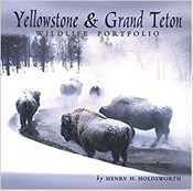 Yellowstone/Grand Teton portfolio