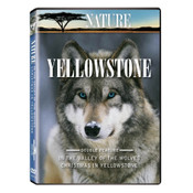 Two DVDs in package with wolf photo