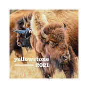 National Park Calendar with bison